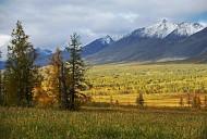 Rừng nguyên sinh Komi lớn nhất Châu Âu thuộc Nga