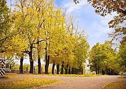 Mùa thu nước Nga đẹp đến nao lòng