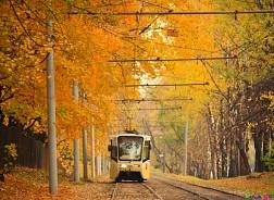 Mùa thu nhuộm mầu nước Nga trong sắc vàng rực rỡ