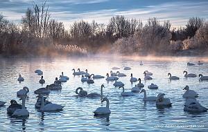 Hồ Thiên Nga tuyệt đẹp trong mùa đông chết